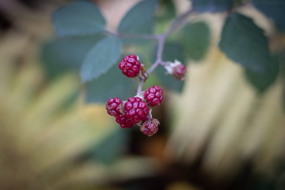 Leselaunen | Naturfotografie
