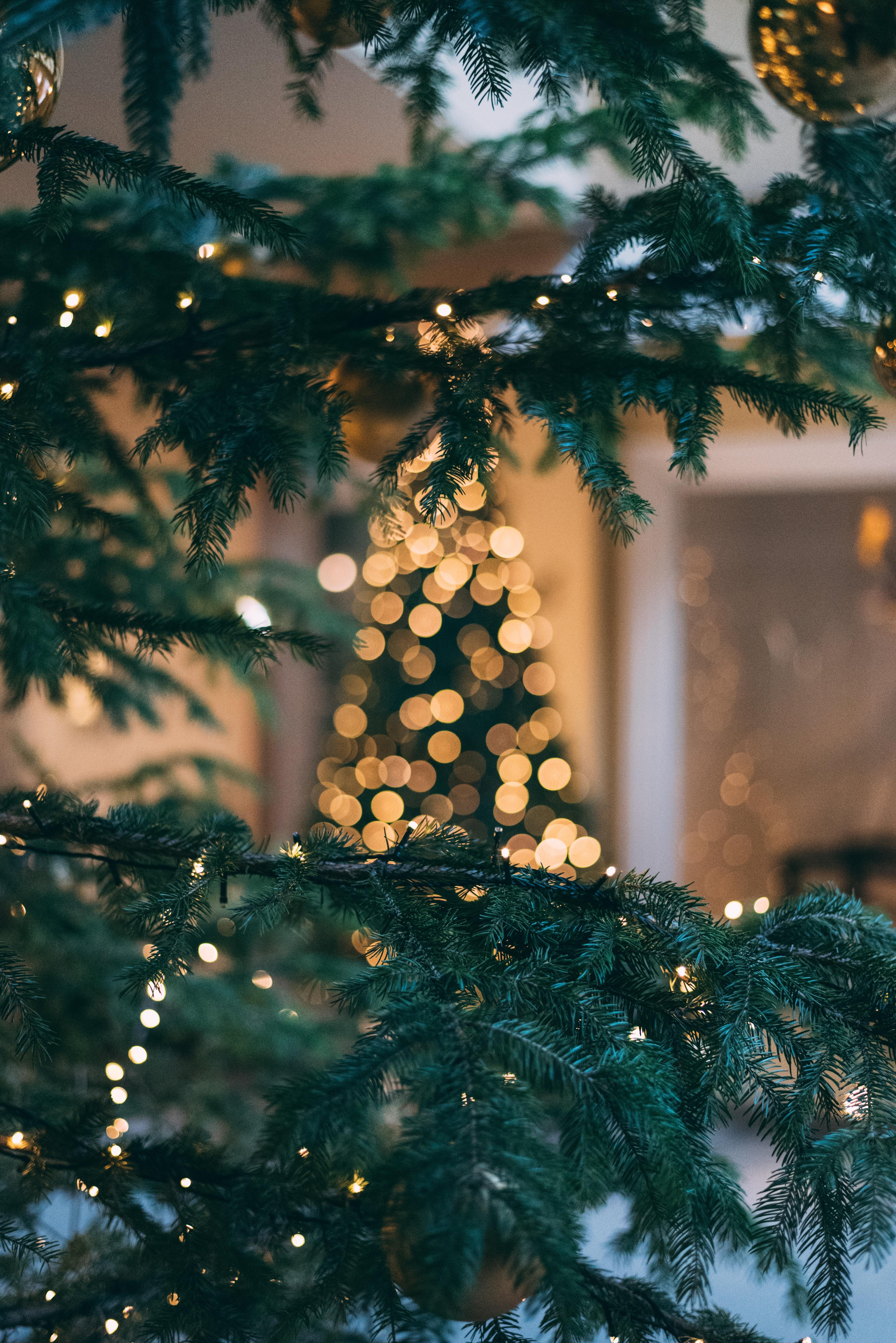 Leselaunen | Weihnachtszeit & Tierfotografie
